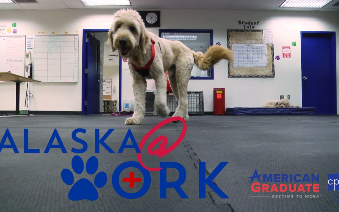 Video: Start a Career as a Vet Assistant ~ Alaska @ Work